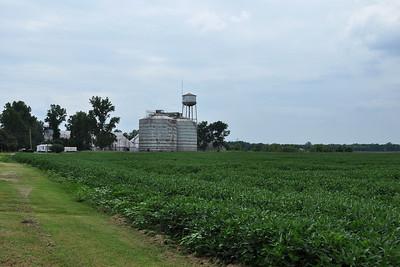 Clarksdale - Soyabean Crops
