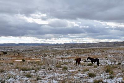 Hope - 4 Horses