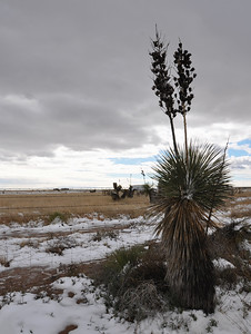 Hope - Yucca Silhouette