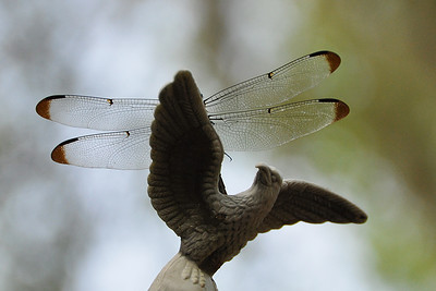 Uncertain - Bigger Wings Than an Eagle