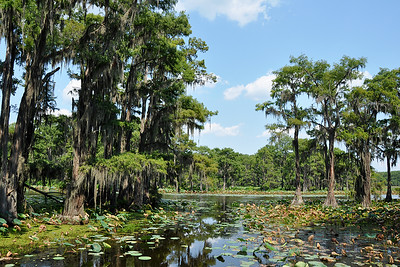 Uncertain - Caddo lake
