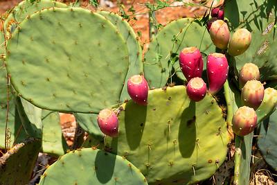 Rotan - Cactus