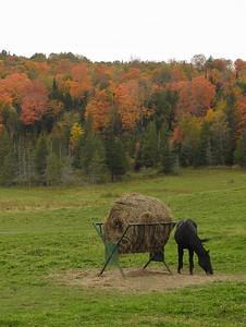 Walden - Black Horse