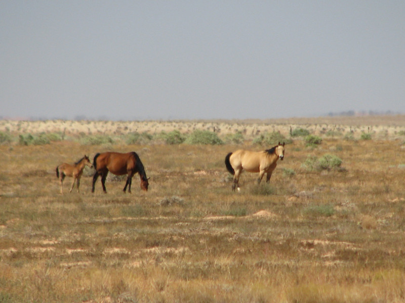 Open range is home to this family of horese.