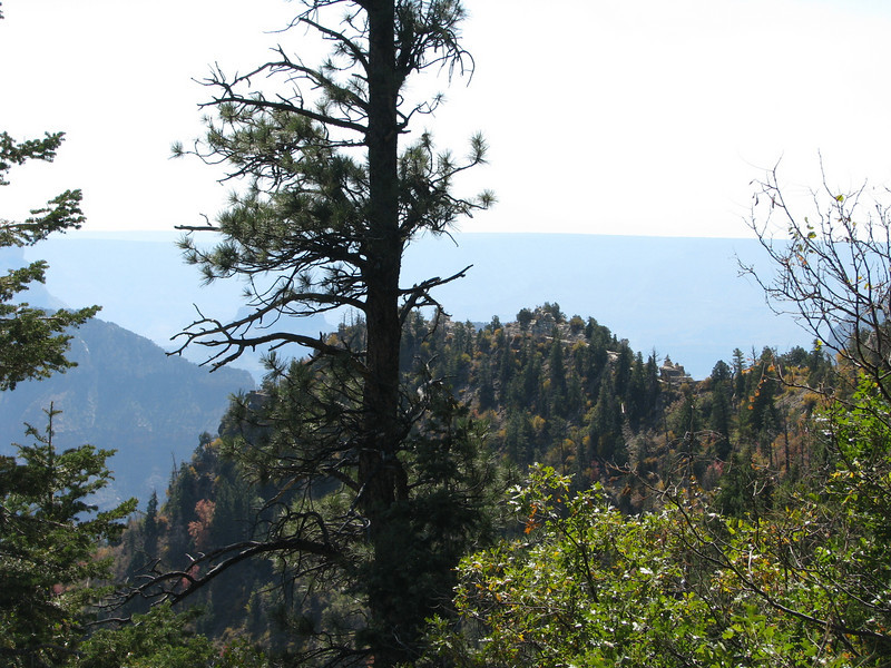 One of the many great sights along the rim trail out to Angel's Pt.