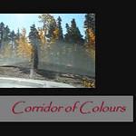 Corridor of Colours