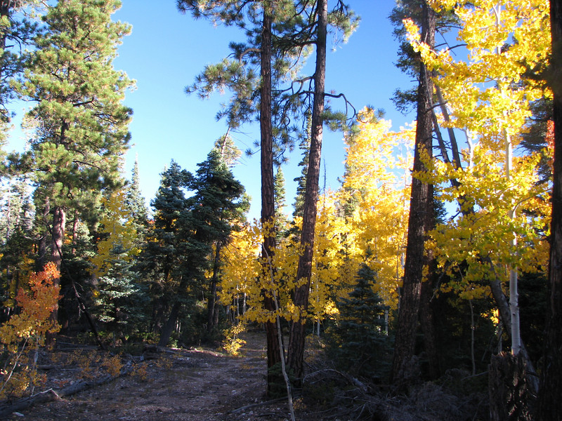 9/29/2009<br /> Another great morning,it was wonderful to wake up deep in Kaibab NF, North Rim. A brisk wind was blowing today and clear skies were the order of this day.