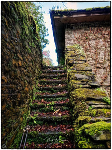 More Mossy Steps