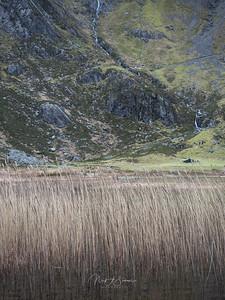 Grasses of Llyn Idwal