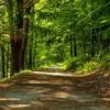 Foot trail along Gilbert Lake, NY