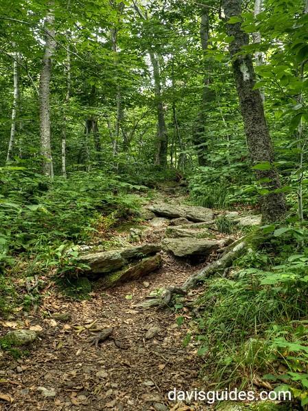 Appalachian Trail beneath summit of Mount Greylock, MA