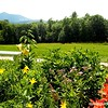 View of Mount Ascutney from Augustus St Gaudens NHS, NH