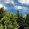 Trees and sky below summit of Mount Ascutney, VT