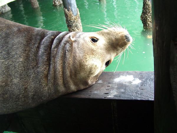 Santa Cruz, May 2003