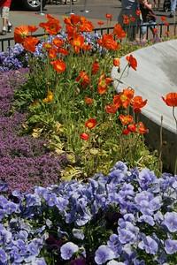 2007-05-13_11-04-41_foss