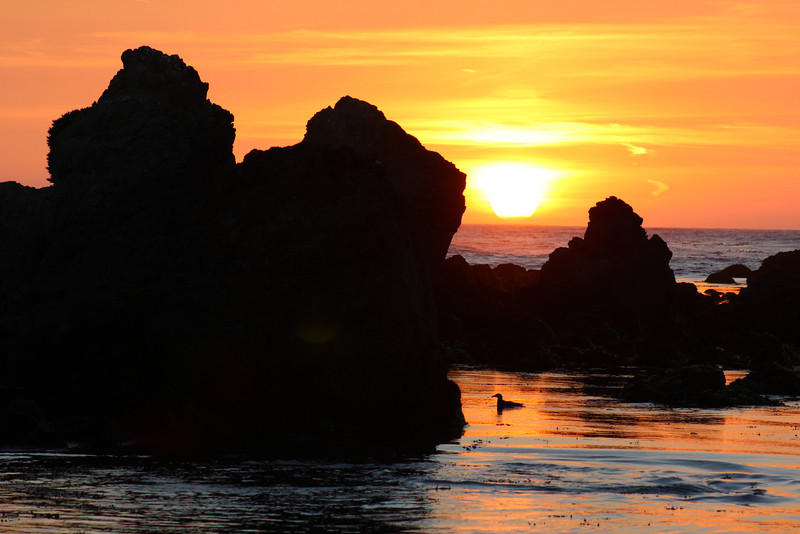Sunset at MacKerricher State Park.  The whirlpool in the corner was made by a very playful seal.