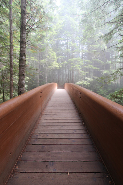 Heading to the Lady Bird Johnson Trail in Redwood National Park.
