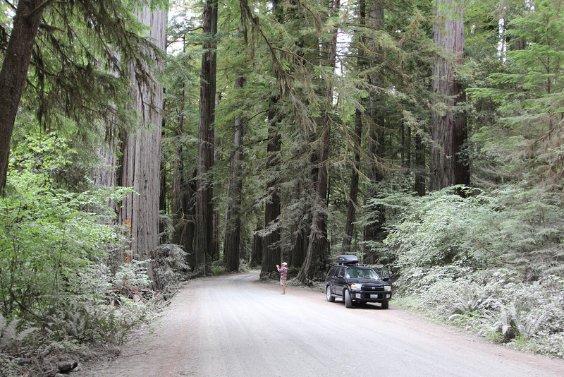 First of the redwoods.