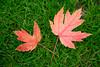 Crossed Leaves<br /> Jacksonville, Oregon