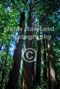 Julia Pfeiffer Burns State Park.  Big Sur, California
