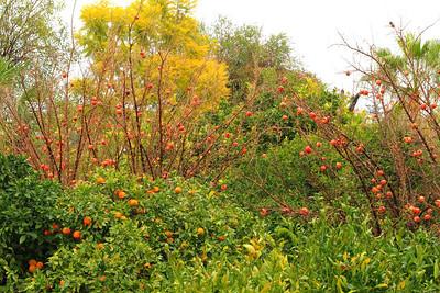 Fruit Gardens of the Bellapais Gardens Hotel, Kyrenia, Northern Cyprus