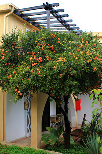 Bellapais Gardens Hotel Bungalows from outside within beautiful tangerine trees