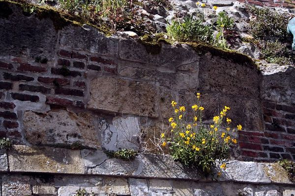 Flowers grow out of an old wall made from many kinds of brick and stone.