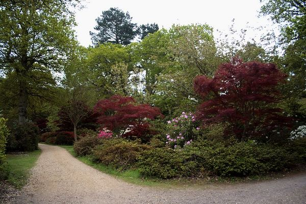 Beautiful red Japanese Maple trees make bright accents.