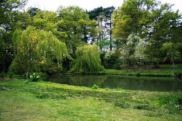 This quiet pond makes a peaceful scene. Everything is lush and green at the beginning of Spring.