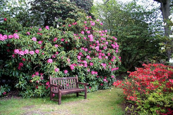 After a beautiful drive past New Forest, the largest area of woodland in England, we arrive at Exbury Gardens. The huge variety and spectacular display of color is breathtaking.