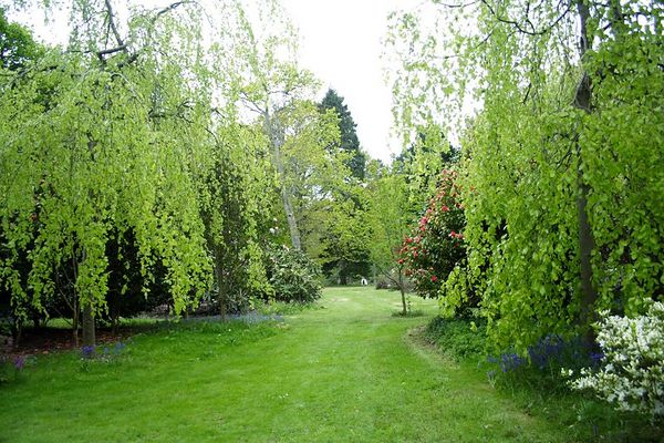 A peaceful green scene of weeping trees and grass lined with bluebells and azalias.