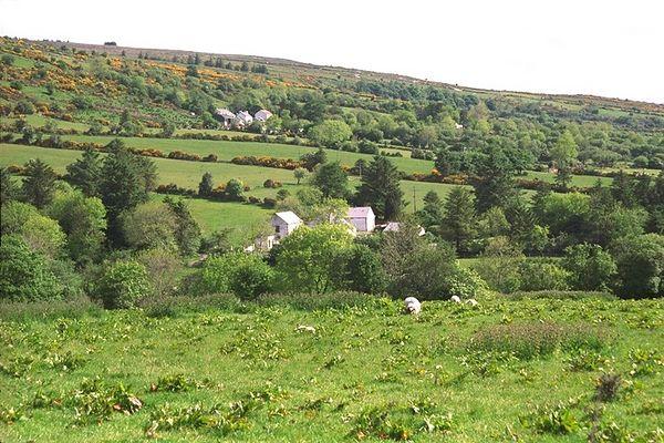 Gorse Hills
