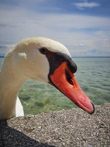 Quo Vadis. Sirmione. Lago di Garda