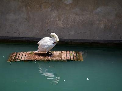 Clening up. Sirmione. Lago di Garda
