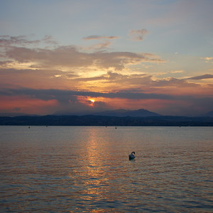 Swan and Sunset. Sirmione. Lago di Garda