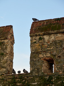 Pigeons. The Castle of Sirmione. Lago di Garda