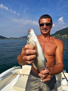 Siika - Whitefish. Lago di Iseo