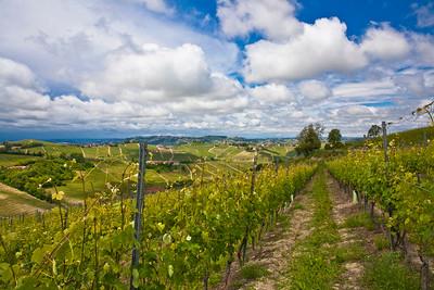 Vineyards in the Piedmont