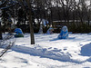 """Natural Habitat Adventures Northern Lights tour, 6-13 Feb 2017.  Churchill, Canada.  Bear statues or """"Bears on Broadway"""" on the grounds of the Manitoba Legislative Building in Winnipeg.  Local artists have painted scenes on them."""