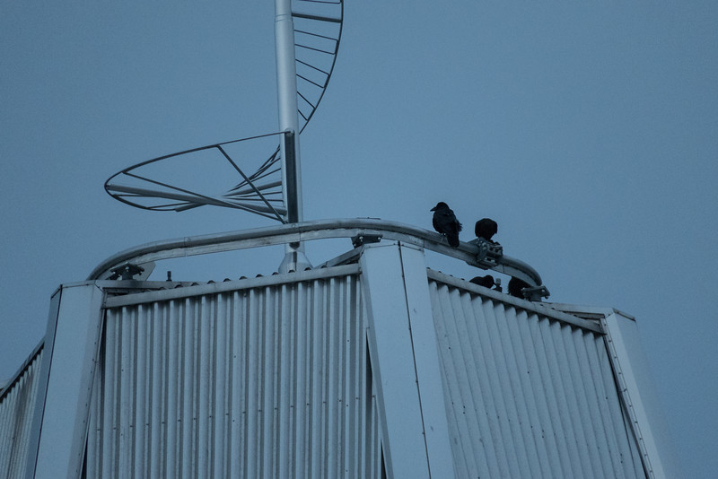 Corvids on top of Science North at dawn.