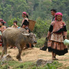 Woman leading water buffalo - Can Cau Market