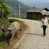 Encounter during hike to Than Kim Village