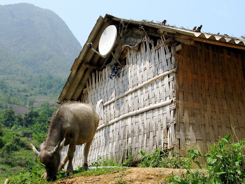 Water buffalo and modern technology