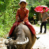 Boy on water buffalo near Trung Do on the way to Lao Cai.