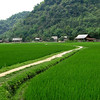 Rice fields on the way to Lao Cai