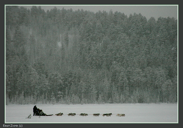 Dogsleding on Talvatis Lake<br /> Jokkmokk 2011