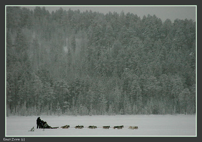 Dogsleding on Talvatis Lake Jokkmokk 2011