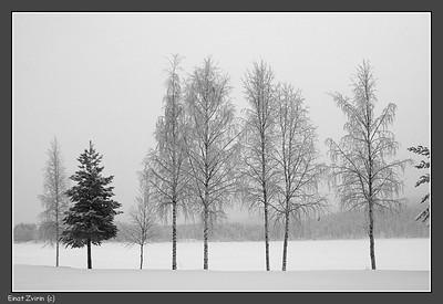 Talvatis Lake Jokkmokk 2011