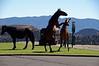 3049 - Wild horses in town - Virginia City, Nevada