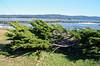 2920 - Battery Point Lighthouse - Along the California Coast Highway_DxO_DxO_1